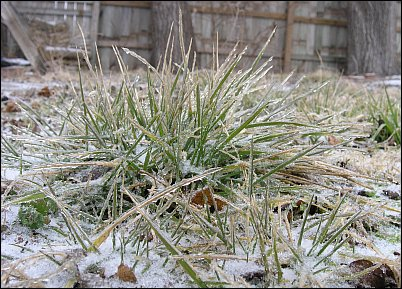 Photo of ice-covered grass