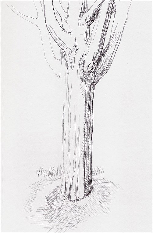 Pen & Ink Drawing of a Tree