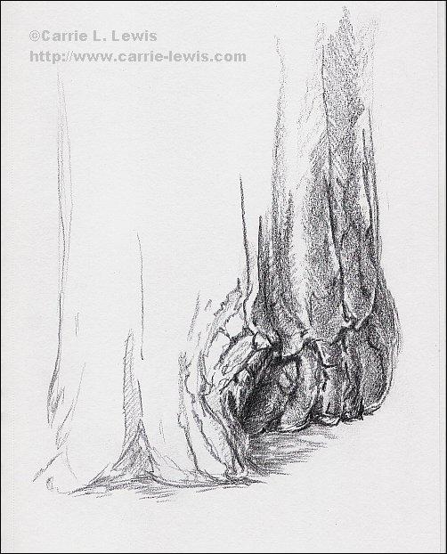October 3, 2013 Tree Sketch #1