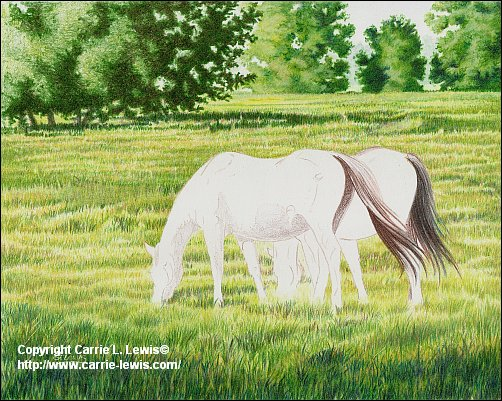 Original Colored Pencil, Afternoon Graze, April 4, 2013