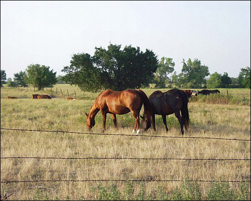 Reference Photo for Afternoon Graze