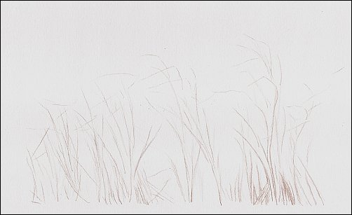 Colored Pencil Demo #1 Autumn Grass