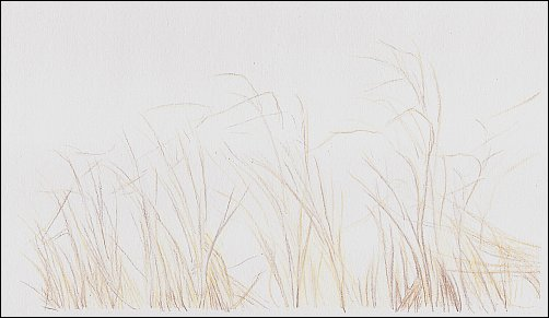 Colored Pencil Demo #2 Autumn Grass
