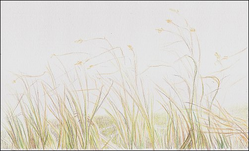 Colored Pencil Demo #3 Autumn Grass