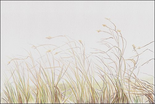 Colored Pencil Demo #4 Autumn Grass