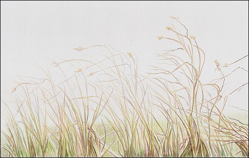 Colored Pencil Demo #5 Autumn Grass