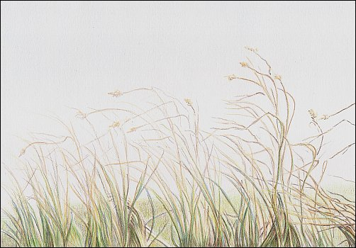 Colored Pencil Demo #6 Autumn Grass