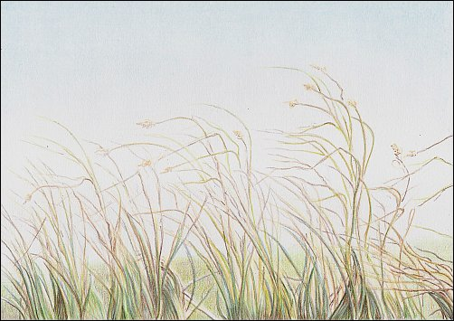 Colored Pencil Demo #7 Autumn Grass