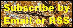 Subscribe to receive email notifications of new content or RSS feeds via MailChimp