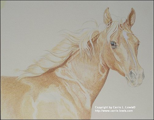 Direct Drawing Tutorial - Palomino Horse - Second Color Layers Step 2
