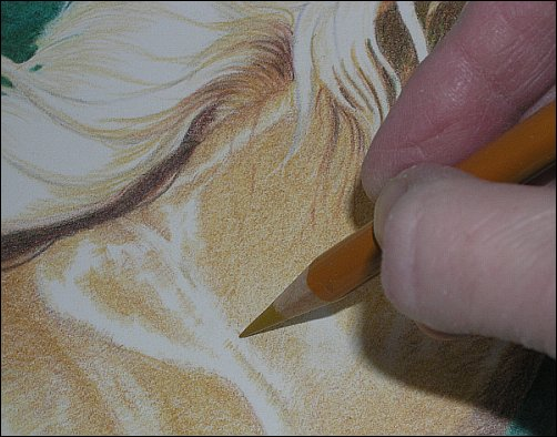 Direct Drawing Tutorial - Palomino Horse - Third Color Layers Step 2 Detail