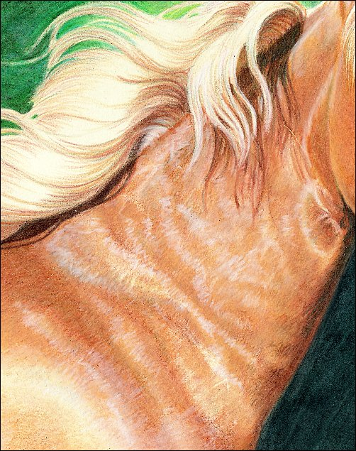 Direct Drawing Tutorial - Palomino Horse - Finishing Work Step 3