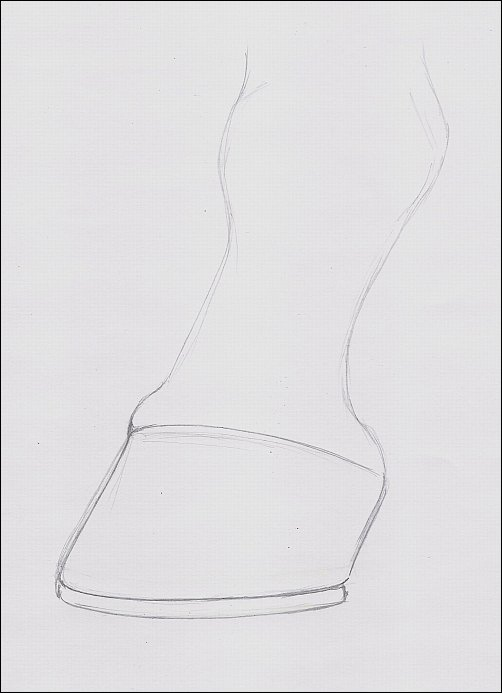 Drawing of Hoof, Step 1