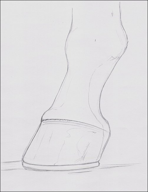 Drawing of Hoof, Step 2