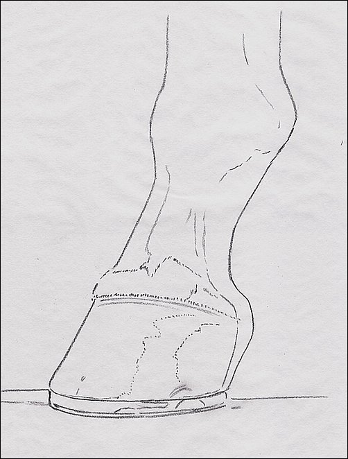 Drawing of Hoof, Step 3