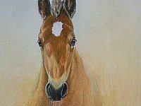 Original colored pencil drawing of foal by Carrie L. Lewis