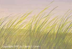 Landscape Study #15 2007