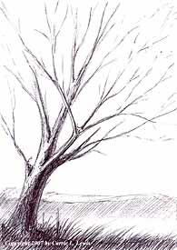 Landscape Study #78 2007