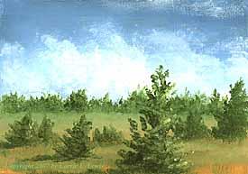 Landscape Study #113 2007