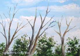 Landscape Study #240 2007