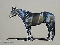 Original colored pencil drawing of Thoroughbred stallion Salt Lake by Carrie L. Lewis
