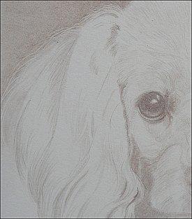limitedpalettedogdetail1-carrielewis