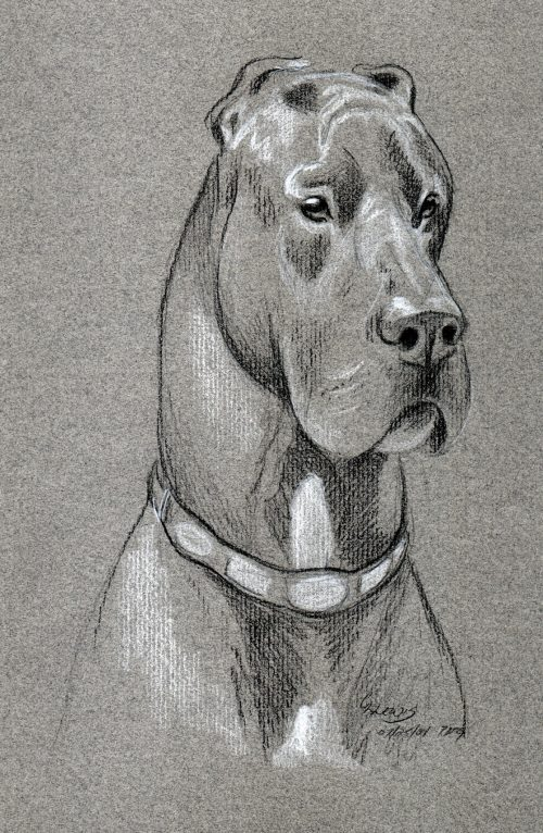 Sketching With Colored Pencils - Dog