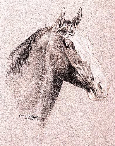 Sketching with Colored Pencils - Clydesdale