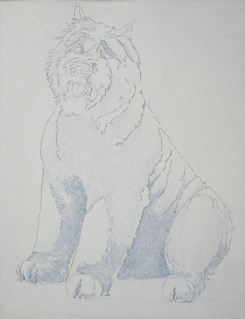 How to Draw a Dog in Colored Pencil Part 1 - Indigo Layer 1