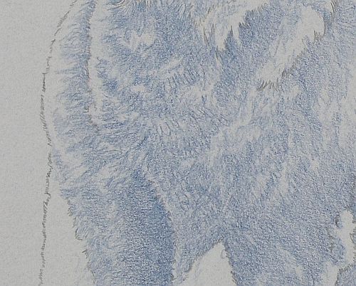 How to Draw a Dog in Colored Pencil Part 1 - Indigo Layer 2 Detail 2
