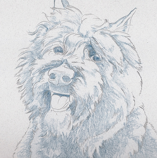 How to Draw a Dog in Colored Pencil Part 1 - Indigo Layer 2 Detail