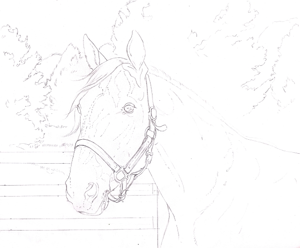 How to Draw a Horse Using a Grid Step 9