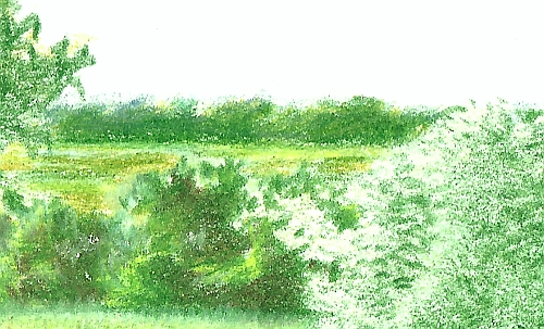 Drawing of Trees in the DIstance