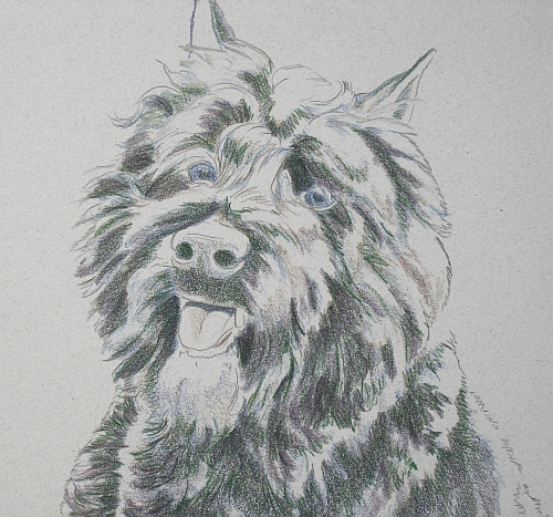 How to Draw a Dog in Colored Pencil Part 3 - Black Grape Layer Detail 1