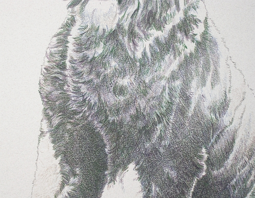 How to Draw a Dog in Colored Pencil Part 3 - Black Grape Layer Detail 2