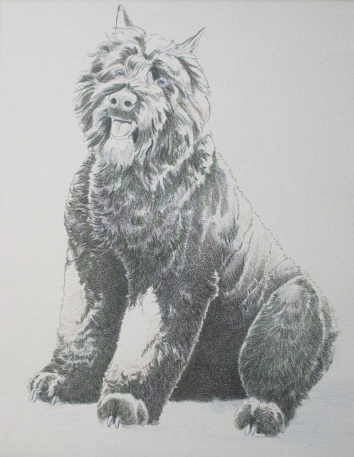How to Draw a Dog in Colored Pencil Part 3 - Black Grape Layer