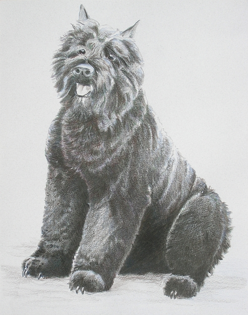 How to Draw a Dog in Colored Pencil Part 4 - Black Layer