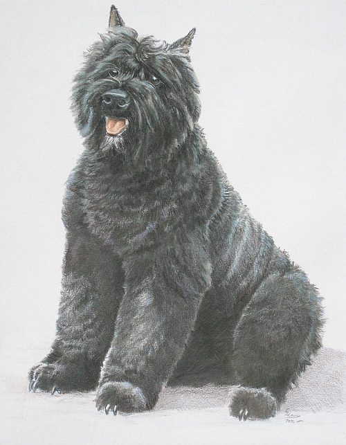 How to Draw a Dog with Colored Pencil Finished
