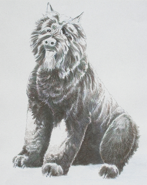 How to Draw a Dog in Colored Pencil Part 4 - Mixed Layer 1