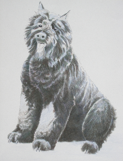 How to Draw a Dog in Colored Pencil Part 4 - Mixed Layer 2