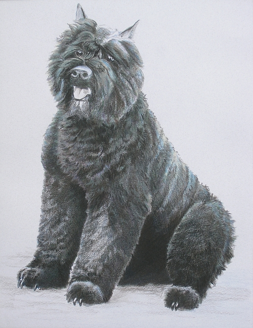 How to Draw a Dog in Colored Pencil Part 4 - Mixed Layer 3