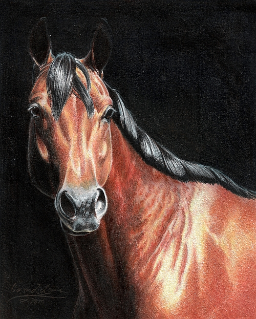 Colored Pencil Methods - Colored Pencil Over Drawing