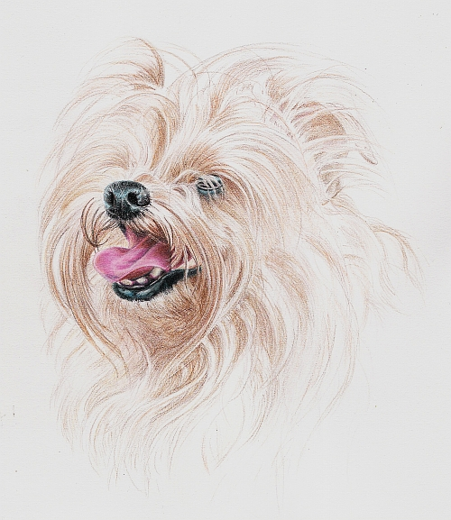 Tips for Drawing Dogs and Puppies - Long Hair
